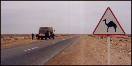 Helaas geen kameel gezien
