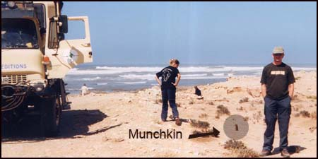 Munchins kattenbak de Sahara